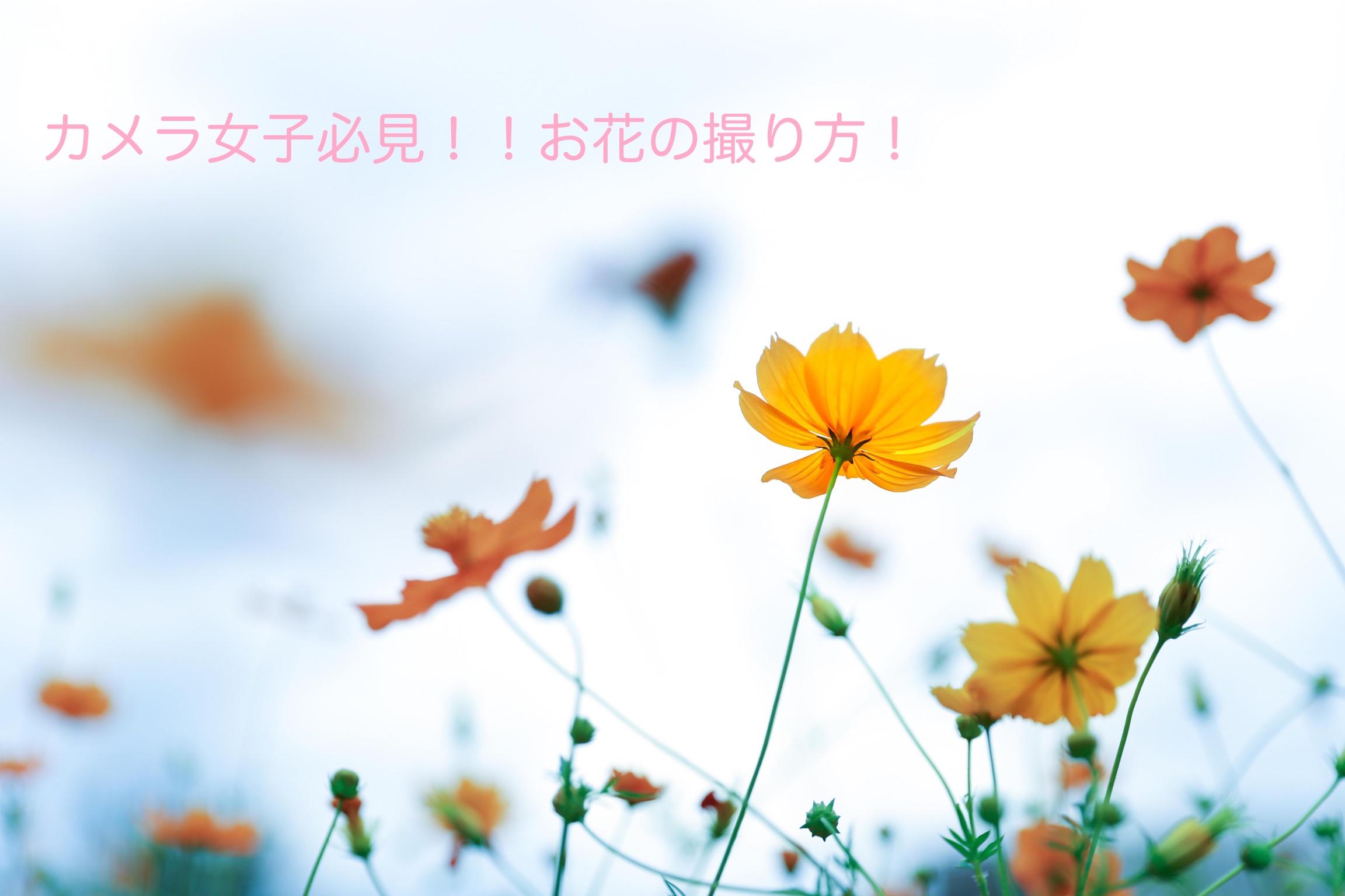 カメラ女子必見!!お花の撮り方!